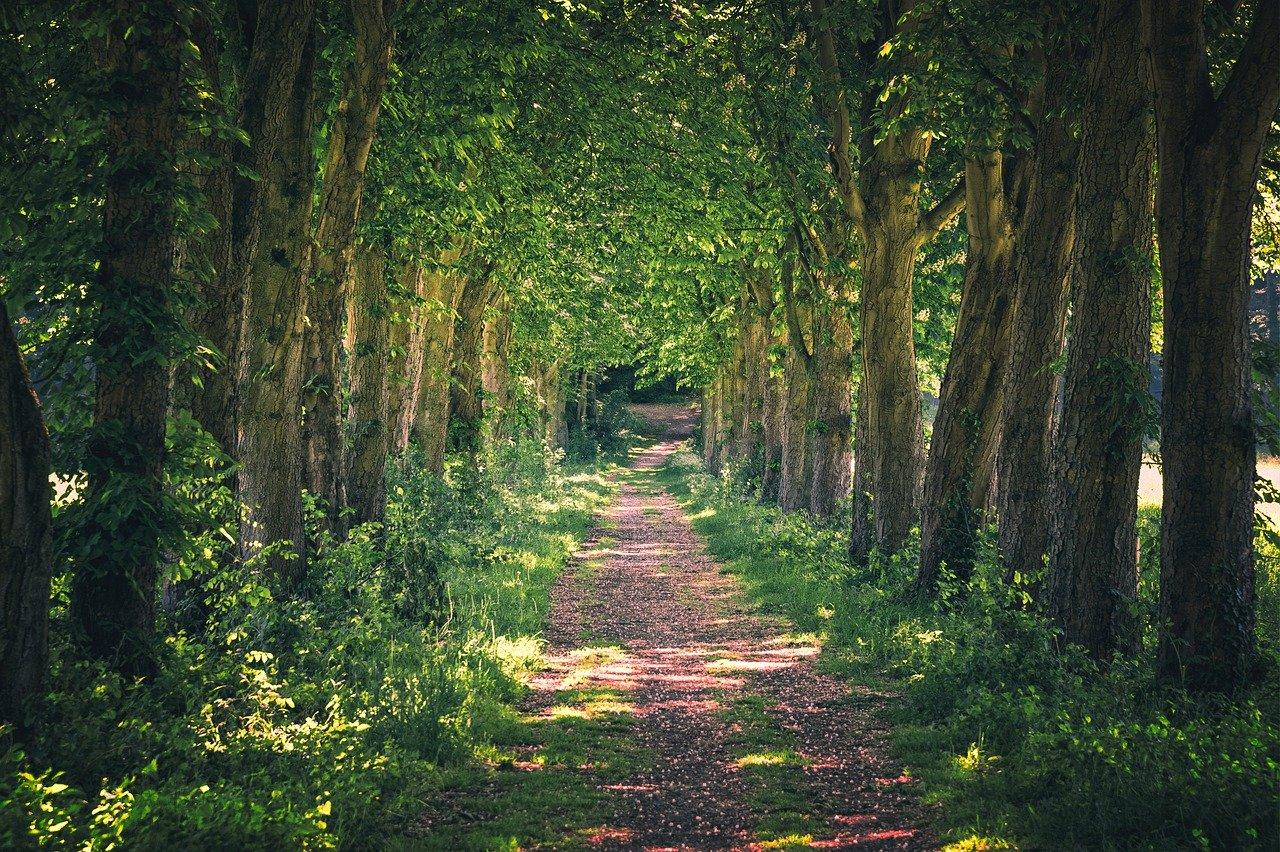 avenue, away, nature